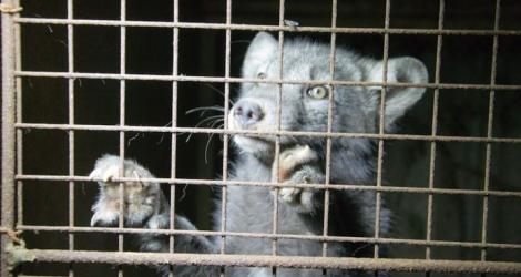 Pojďme chránit zvířata 39b6d15c21
